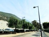 Environment want to destroy ten trees which beautify Queensway