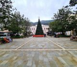 Christmas tree goes up in Piazza